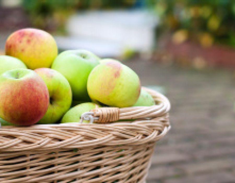 Mikroorganismen: Das Gute im Apfel