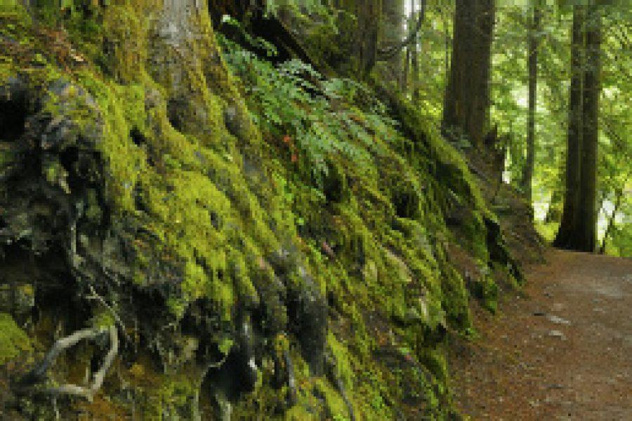 Stresshormone: Mehr Bäume, weniger Stress